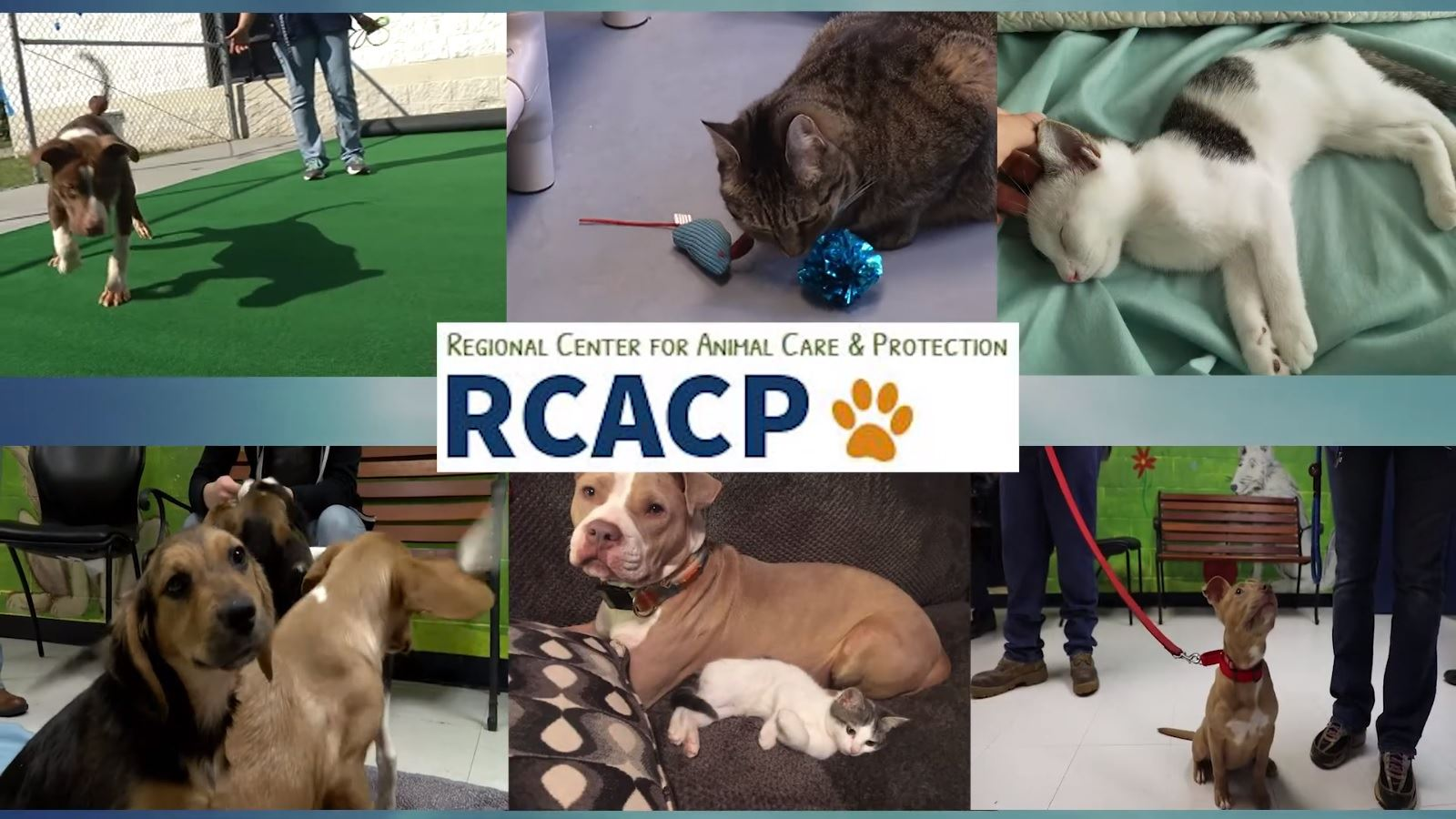 Regional Center for Animal Control & Protection Logo